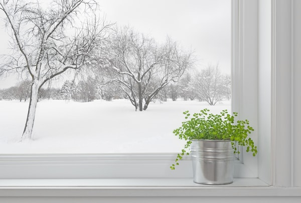 Winter landscape seen through the window, and green plant on a windowsill, why is my heat pump freezing up